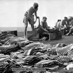Armourers check and load ammunition for Hellcat fighters